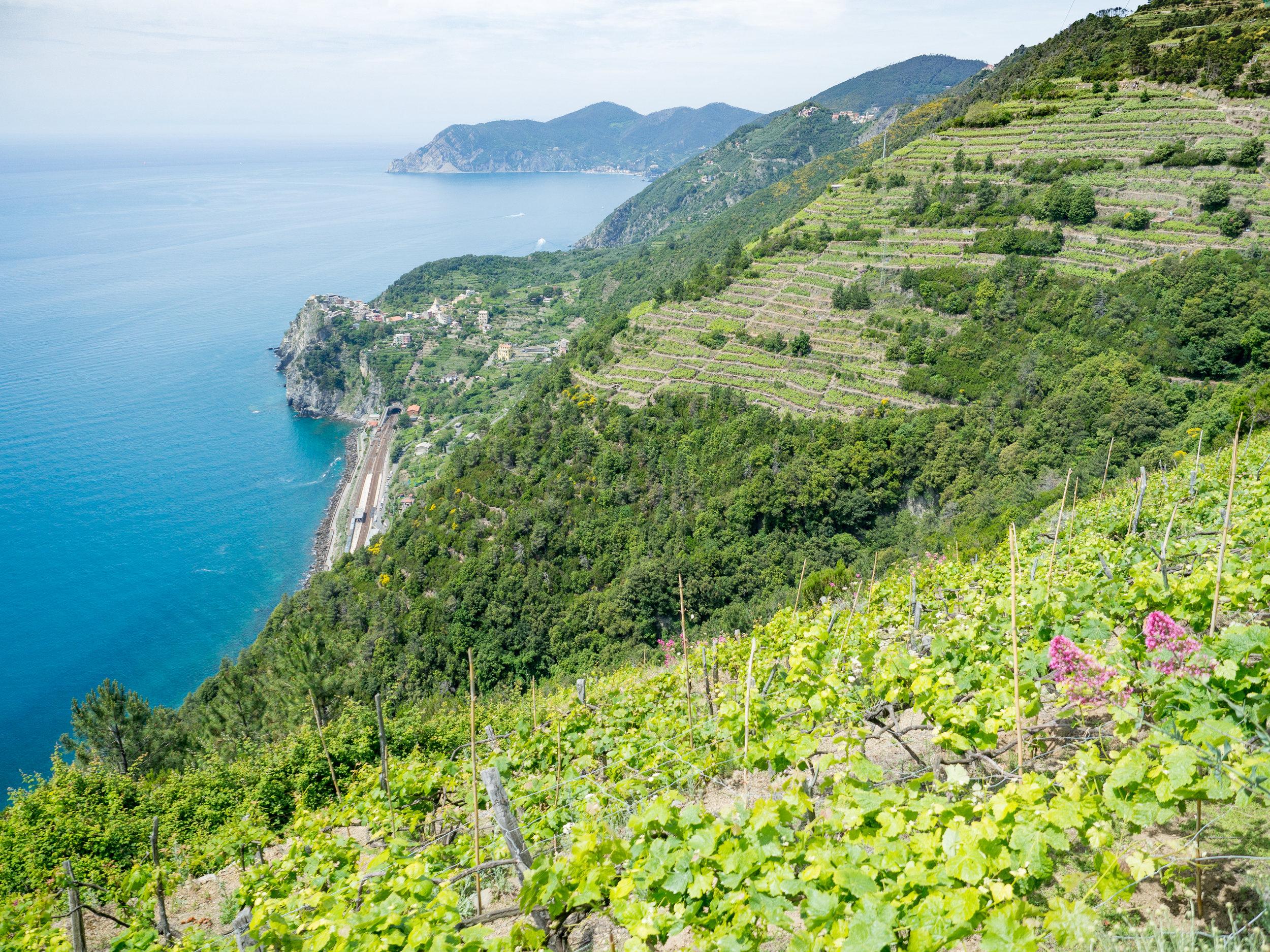 Dream of  hiking in Cinque Terre ?
