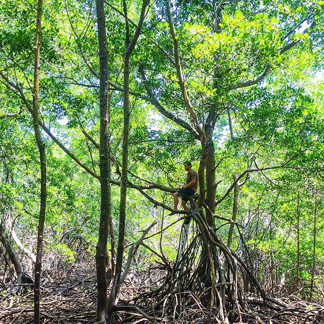 Ground truthing satellite images to understand land cover changes happening in the mangroves.