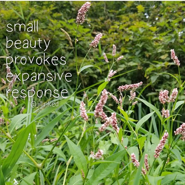 It is grounding to stop and pear at small beauties. . . . . . #smallbeauty  #expand  #grounding #mindfulmoments  #gratitudejournal  #mindfulnessmeditation