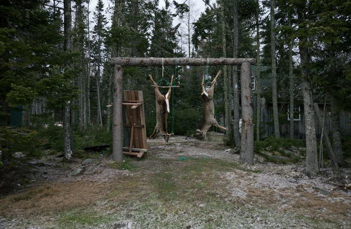 Hodsdon,Canbra_Deer Season_1665118.jpg