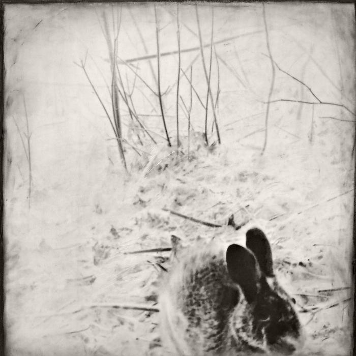 """Jill Skupin Burkholder -   """"Rabbit""""     -  $1200"""