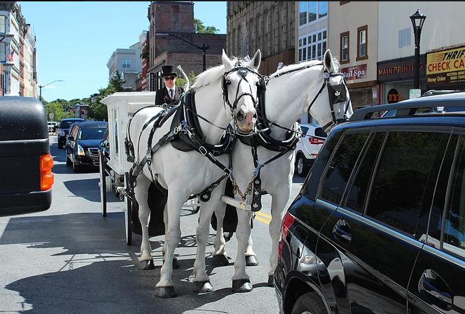 gaynor horses.png