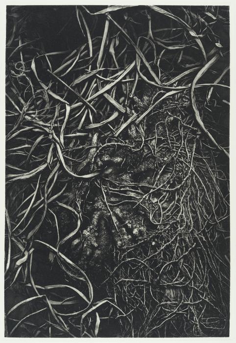 "Richard Hricko   - "" Root I ""   (20""x 15"") -  $800"