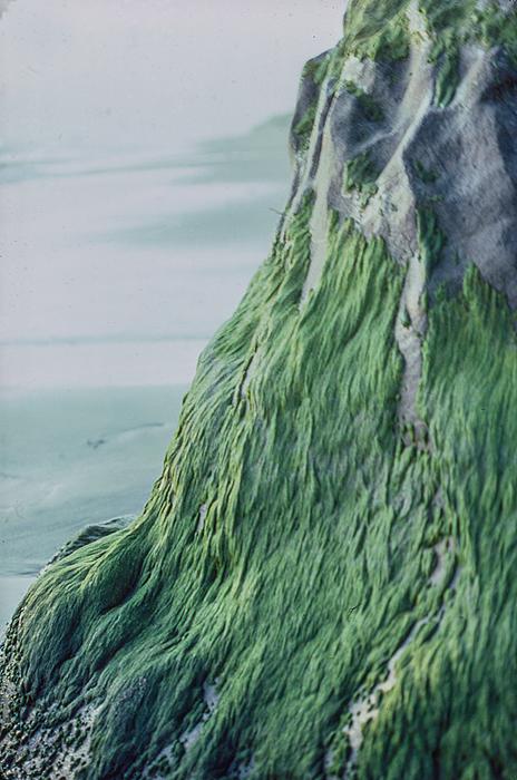 """Bidu Tashjian -  """"Green Mountain""""  (""""15"""" x 20"""") -  $550"""
