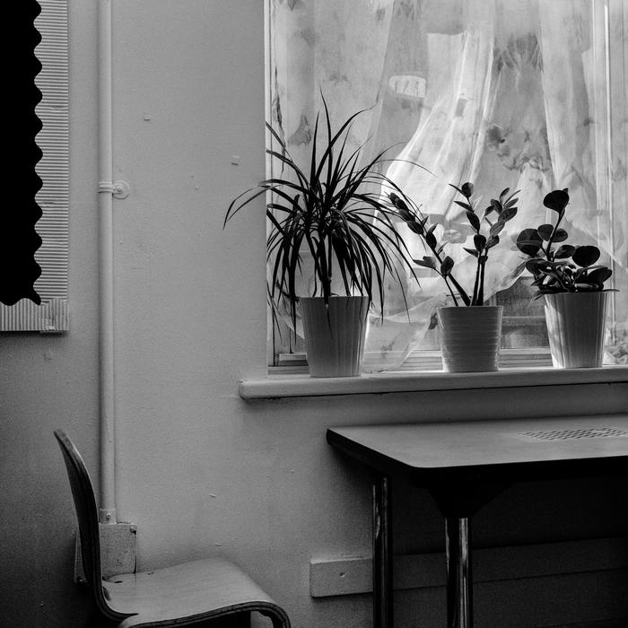 "Sasha Louis Bush -  ""3 Plants, Corlears School, Chelsea, NY""  (16""x 20"") -  $400  EDITION: 1/10"