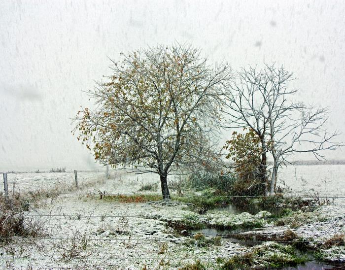"""David King -  """"Trees in Falling Snow""""  (16"""" x 12"""") -  $275"""