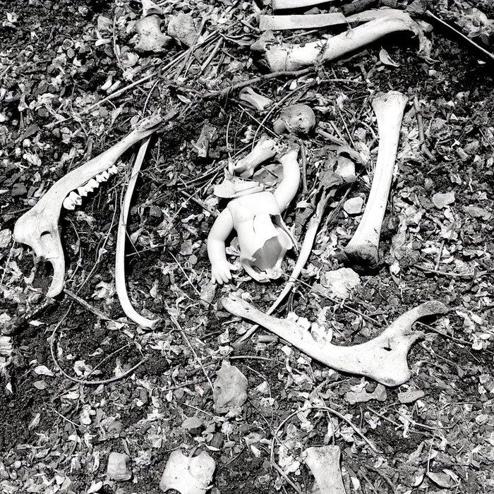 """Jim Allen -  """"Road Kill - Deer Baby""""  (22"""" x 22"""") -  $500"""