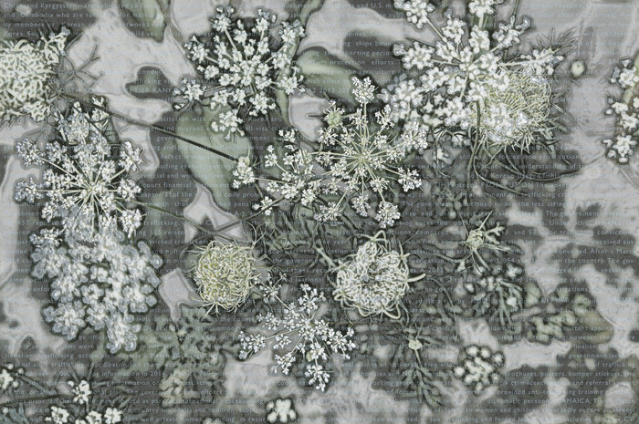 """Ellen Fisher -   Study-Card for Artificial Flower Assembly #24    Photography-based image (15"""" x 22.5"""")  $630"""