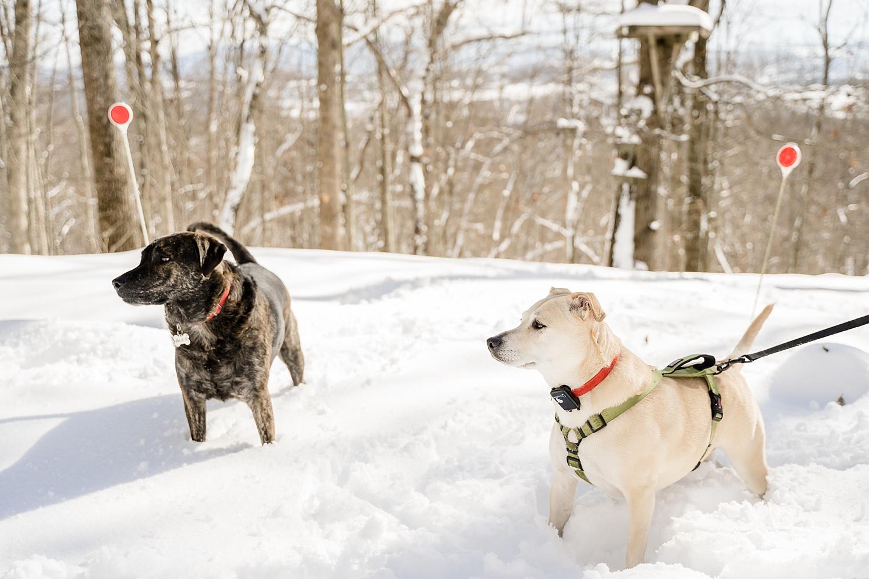 snow-day-blacksburg-va_0196.jpg