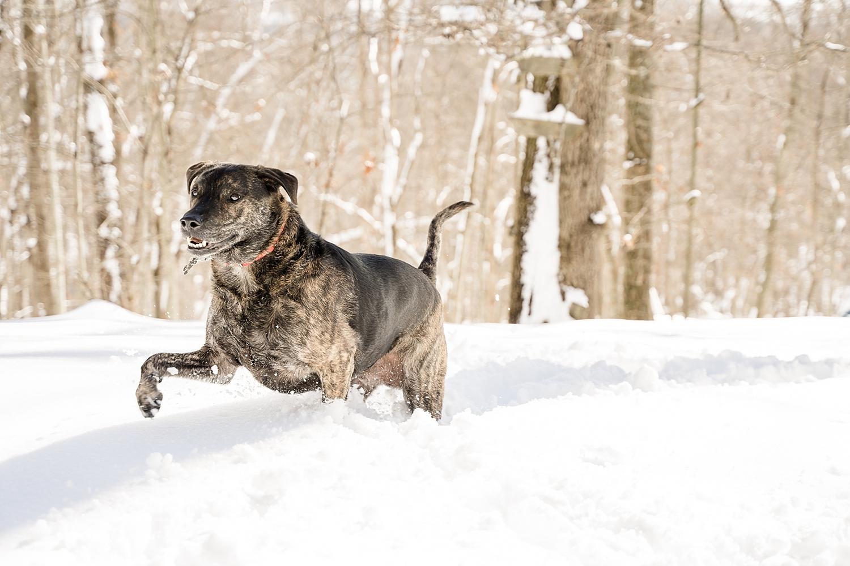 snow-day-blacksburg-va_0197.jpg
