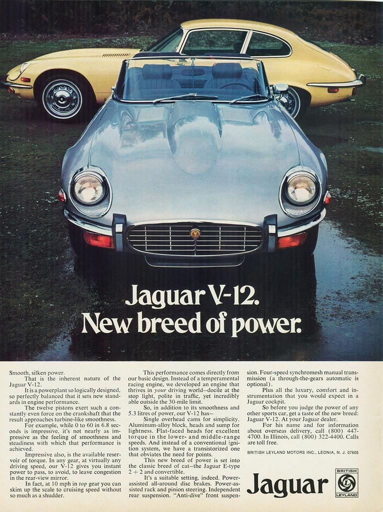 TunnelRam_Jaguar (2).jpeg
