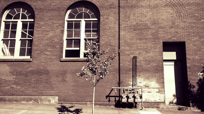 Brick_Tree_BW_UL.jpg