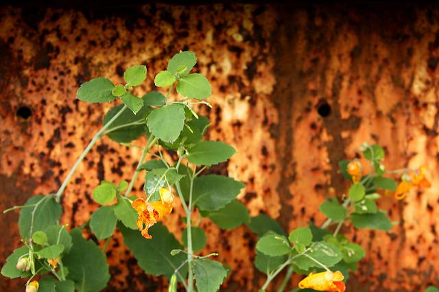 rustplantwall.jpg