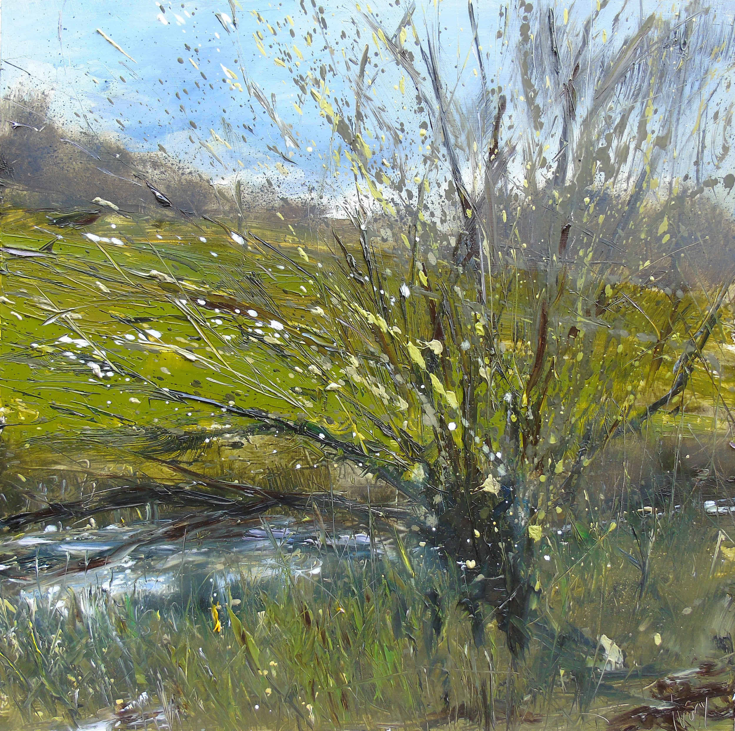 Sapling by the river Parrett, Somerset 40x40cm oil on wood panel.jpg