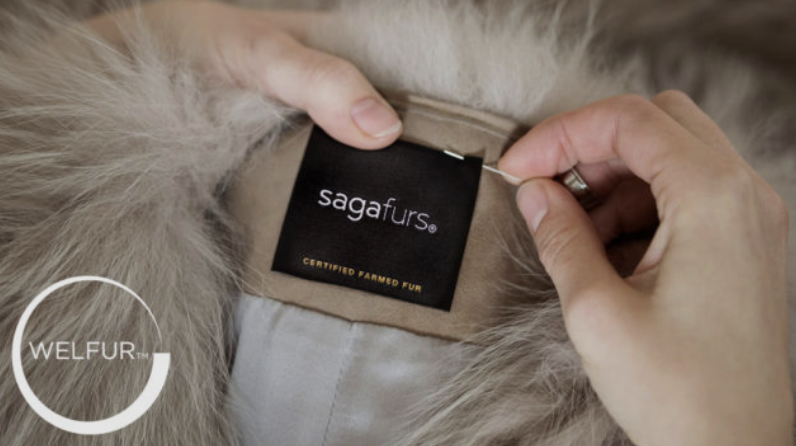 CERTIFICATION - Saga Furs is the only fur seller in the industry with a supplier certification and auditing programme on the environment and animal health and welfare. Saga Certification has been used since 2005, and today it has WelFur inside.