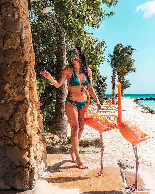 It's not everyday you get to shower with flamingos 💗#ad . . . Flamingo Beach is one of those places that dreams are made of! Funny thing, I didn't realize how hard it would be to get a photo with these beautiful birds... Just when we were getting ready to leave they wandered over and my day was complete! 😍😂 . . Travel tip: If you're not staying at the  Renaissance Hotel you should arrive at 7am to purchase a ticket, which includes lunch and a cocktail. They only sell 20 tickets a day to outsiders and they don't take reservations so first come first serve👍 @arubatourism . . (PS why isn't there a flamingo emoji??) . . . . #arubatourism #onehappyisland #discoveraruba #aruba🇦🇼 #flamingobeach  #arubabeach #arubaonehappyisland #aruba #paradiseisland #explorearuba #travelaruba #travelcouple #whitesand #dreamvacation #traveltips #arubatips #flamingos #arubalife #visitcaribbean