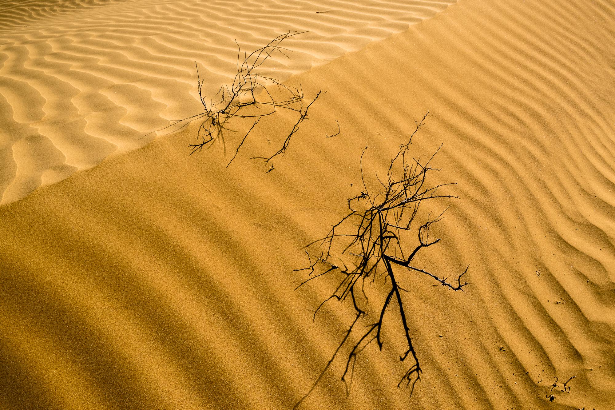 my desert site-5825.jpg