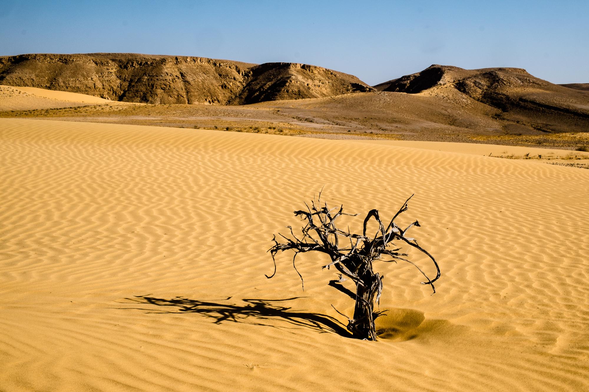 my desert site-5840.jpg