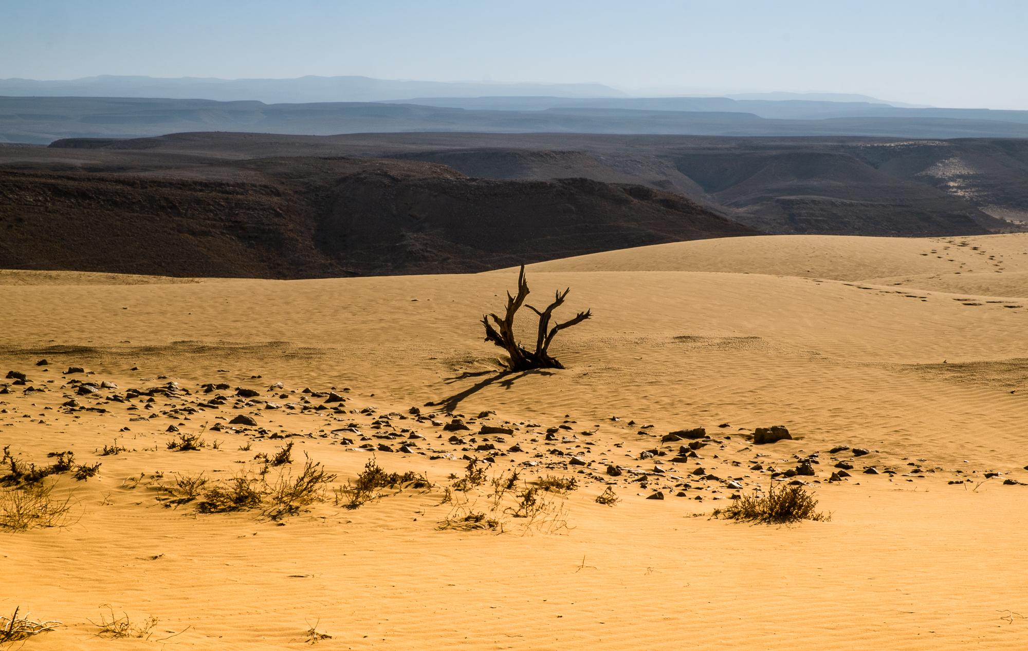 my desert site-5860-2.jpg