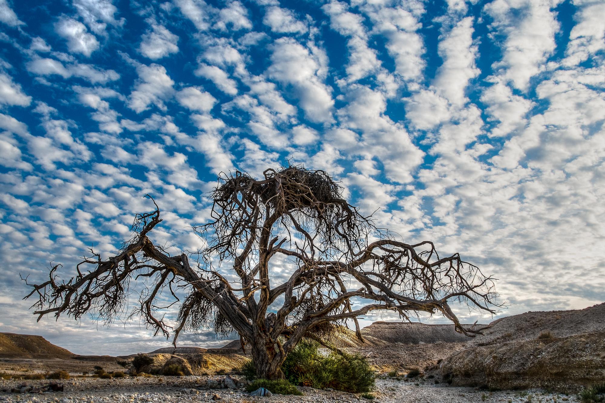 my desert site--48.jpg