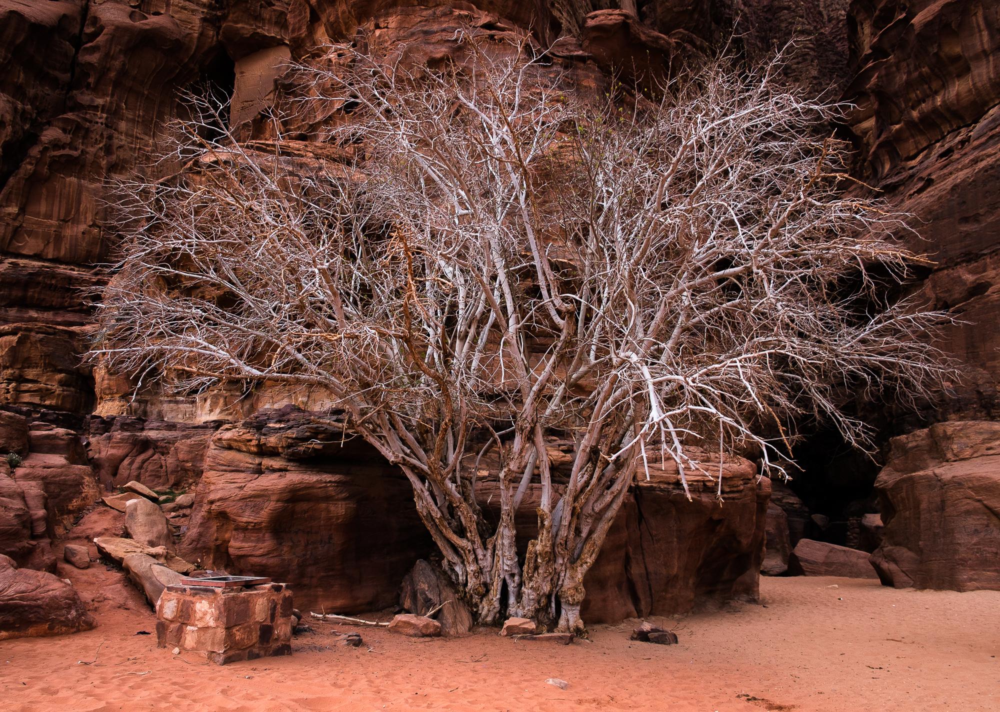 my desert site-9108.jpg