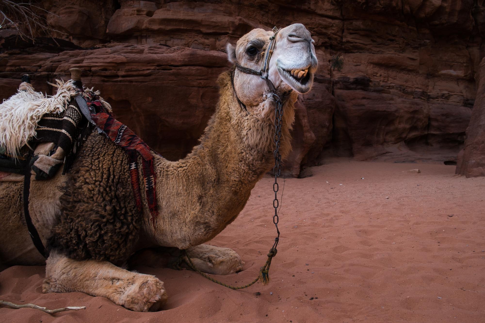 my desert site-9118.jpg