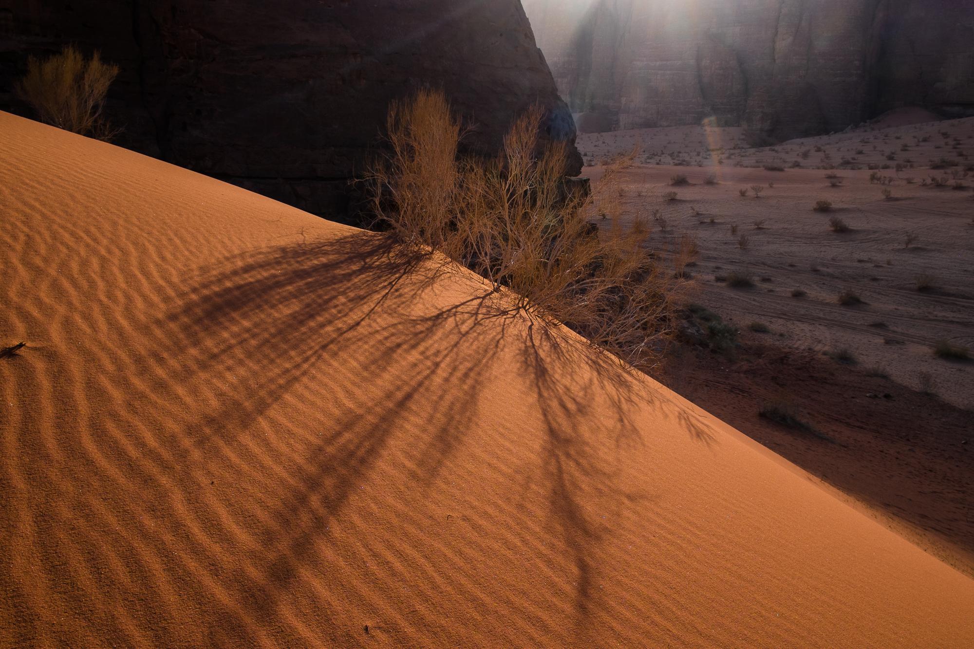 my desert site-9363.jpg