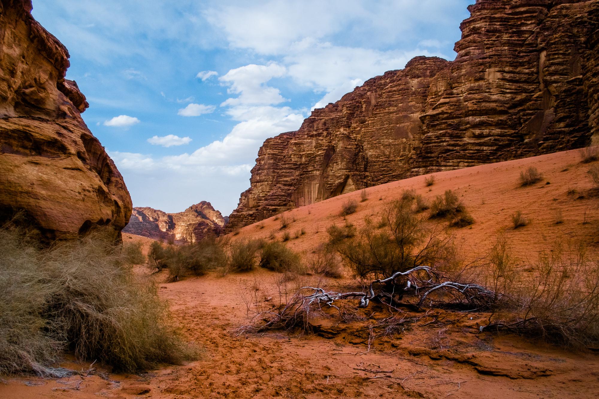 my desert site-9520.jpg