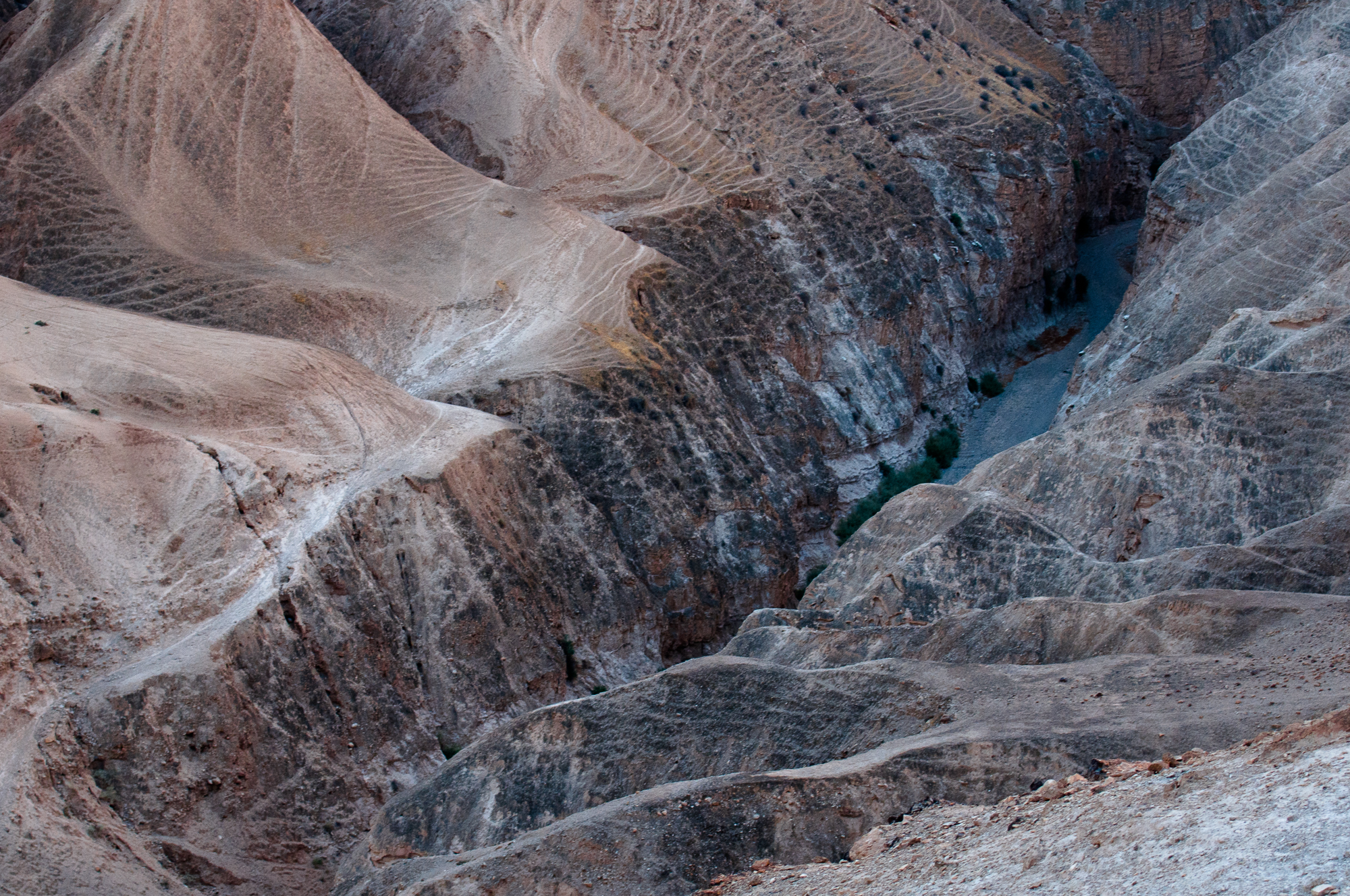 my desert site-8598.jpg