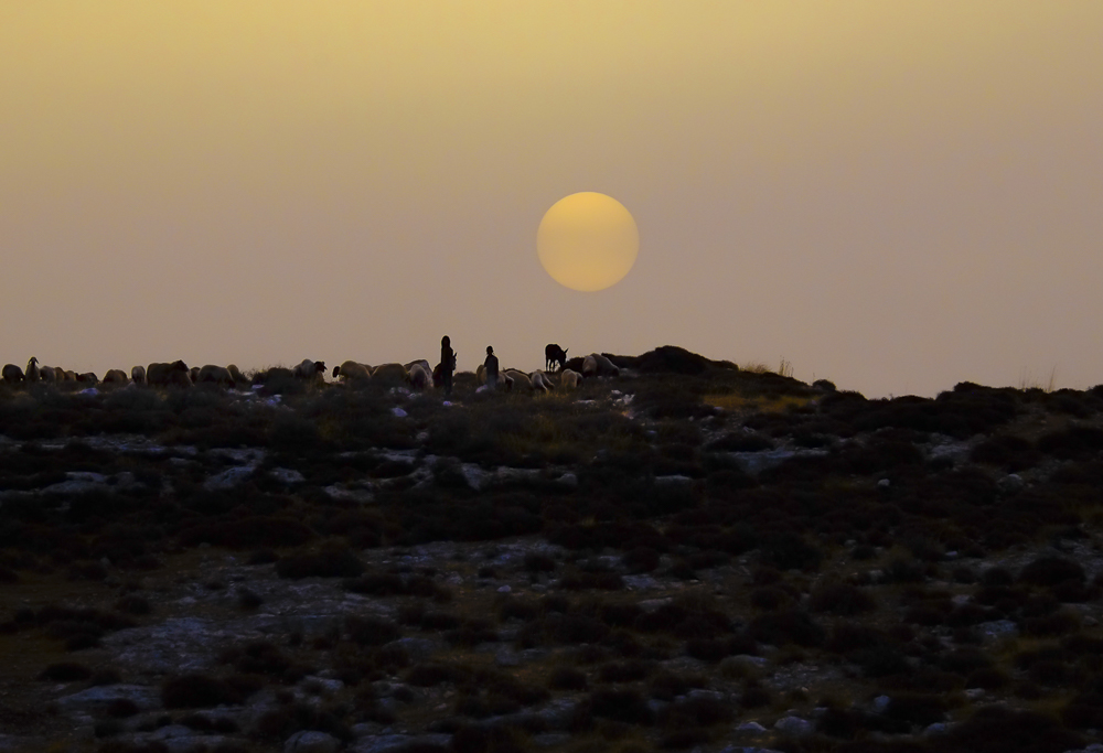 Settlers arriving over the ridge with their flock as the sun rises