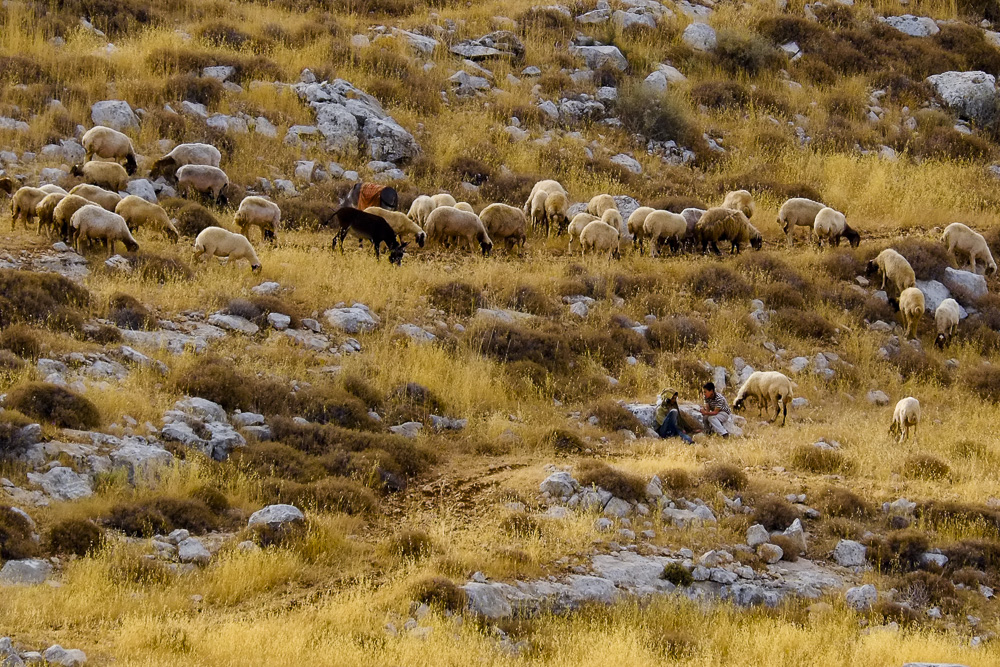 the two young settler boys (often dropout kids who do not fit into any other framework) on the hill across us, while their sheep graze..