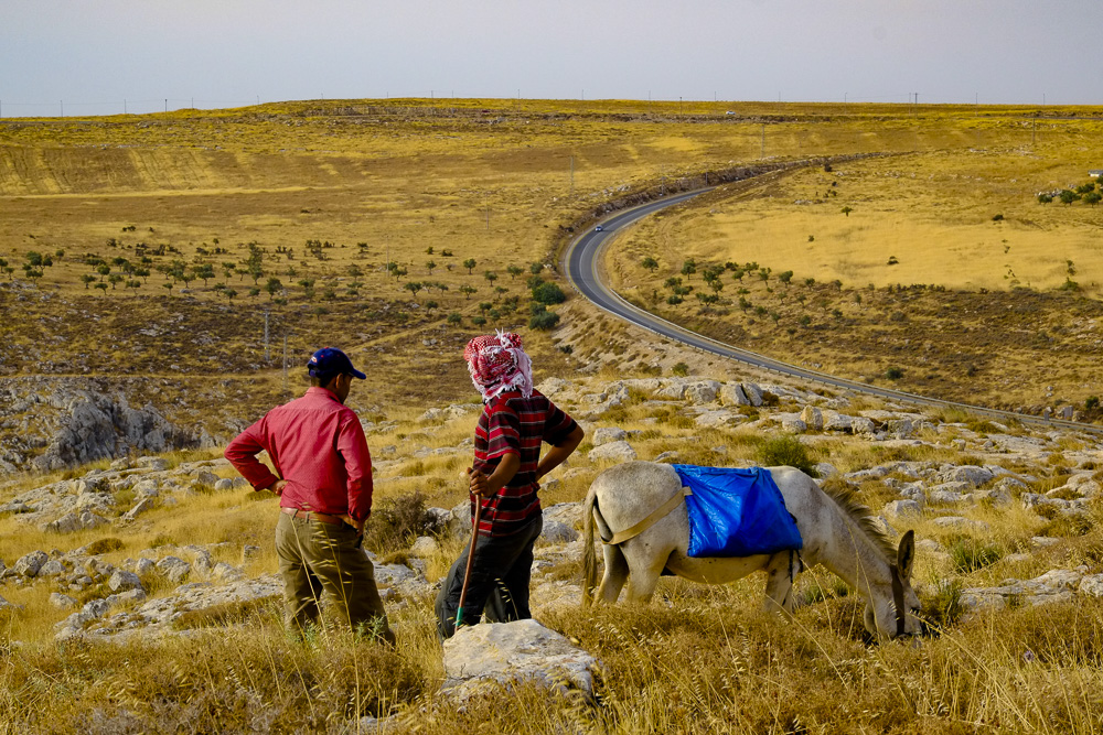 Palestinian herders looking over the land they cultivate to feed their sheep in seasons when grazing is scarce