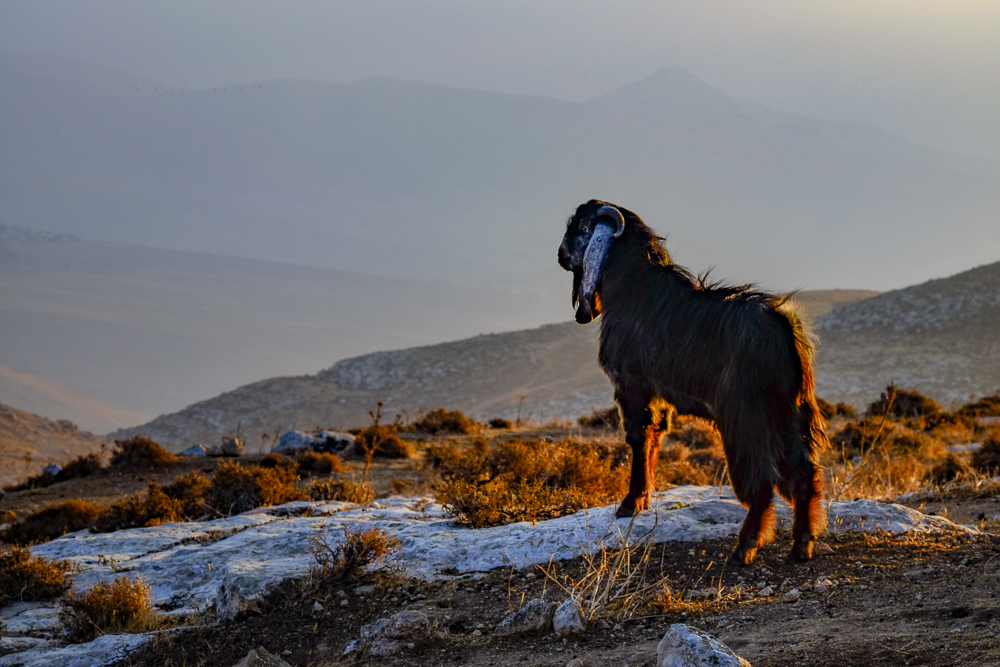 early morning in the hills above the Jordan Valley