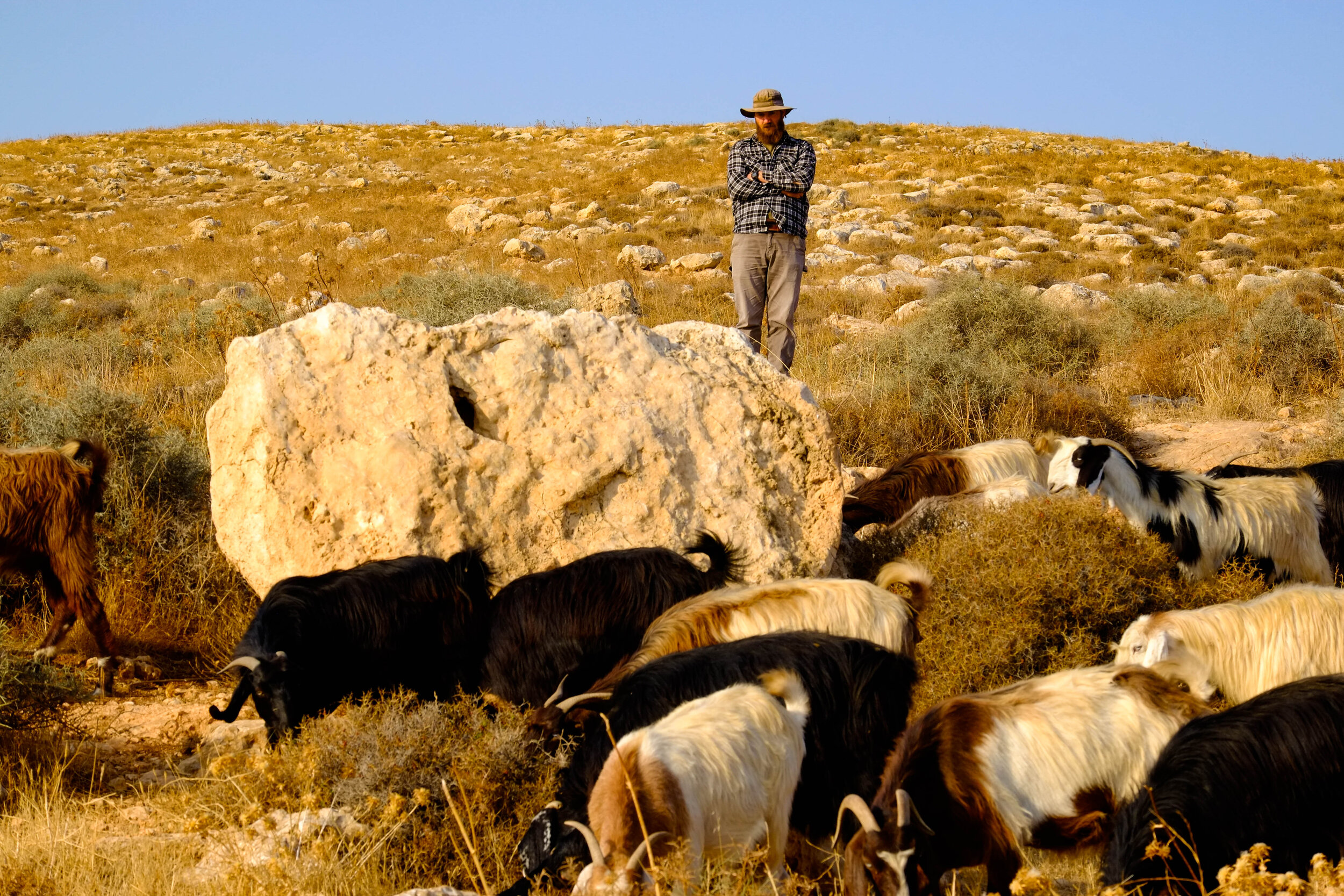 the head settler Elhanan standing over the Bedouin herd