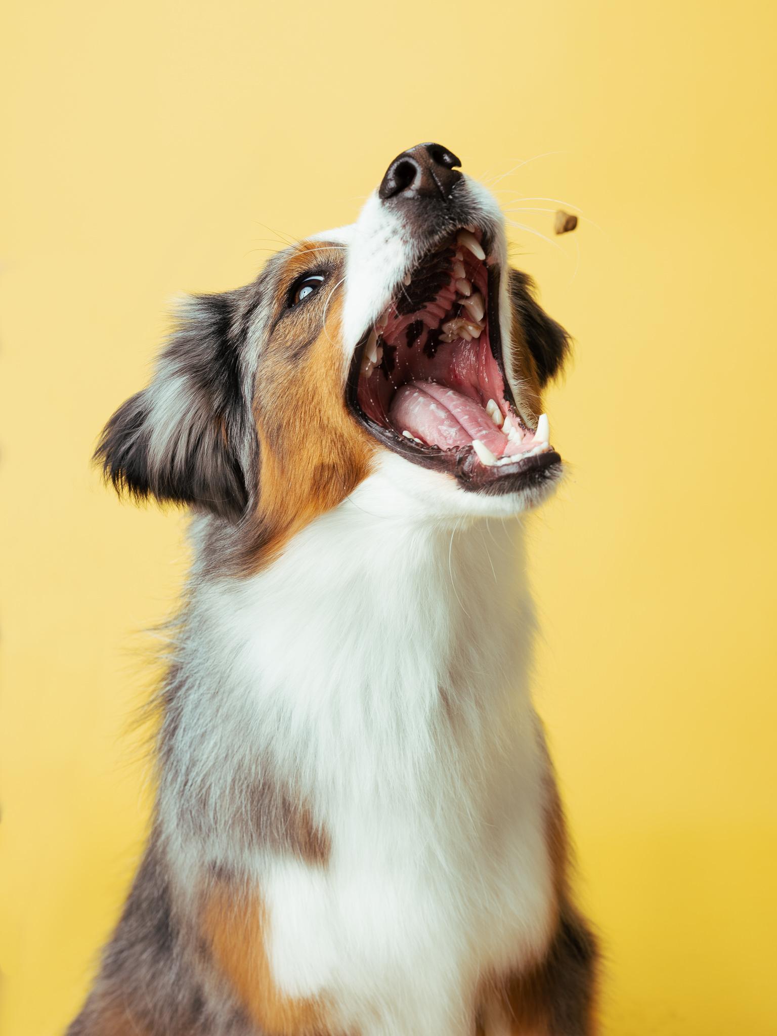 dogs-019-Zenabis December0571-Edit.jpg