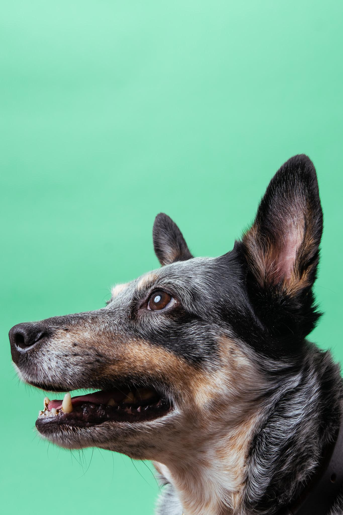 dogs-029-YARA6141.jpg
