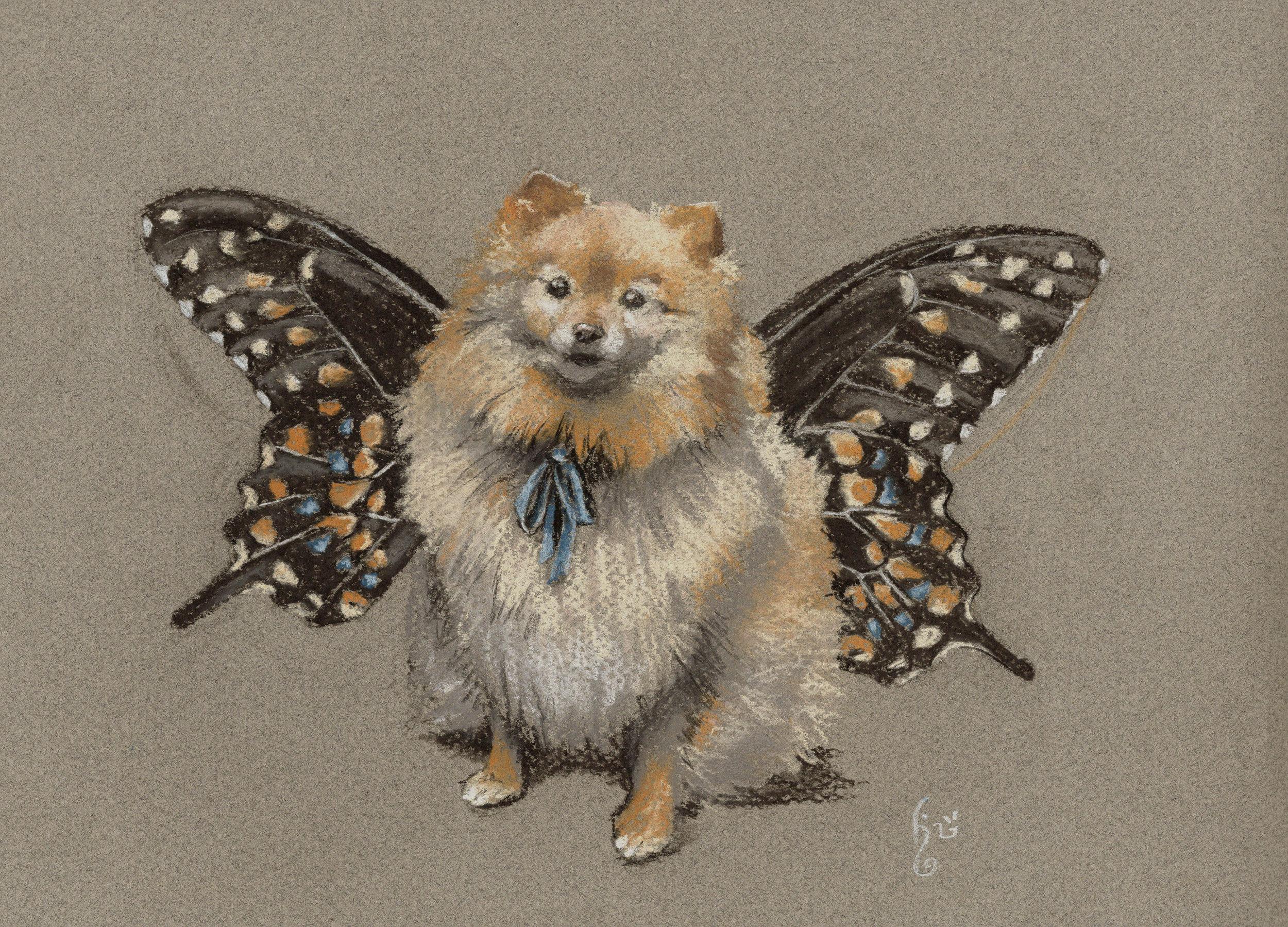 Teddy-butterfly.jpg