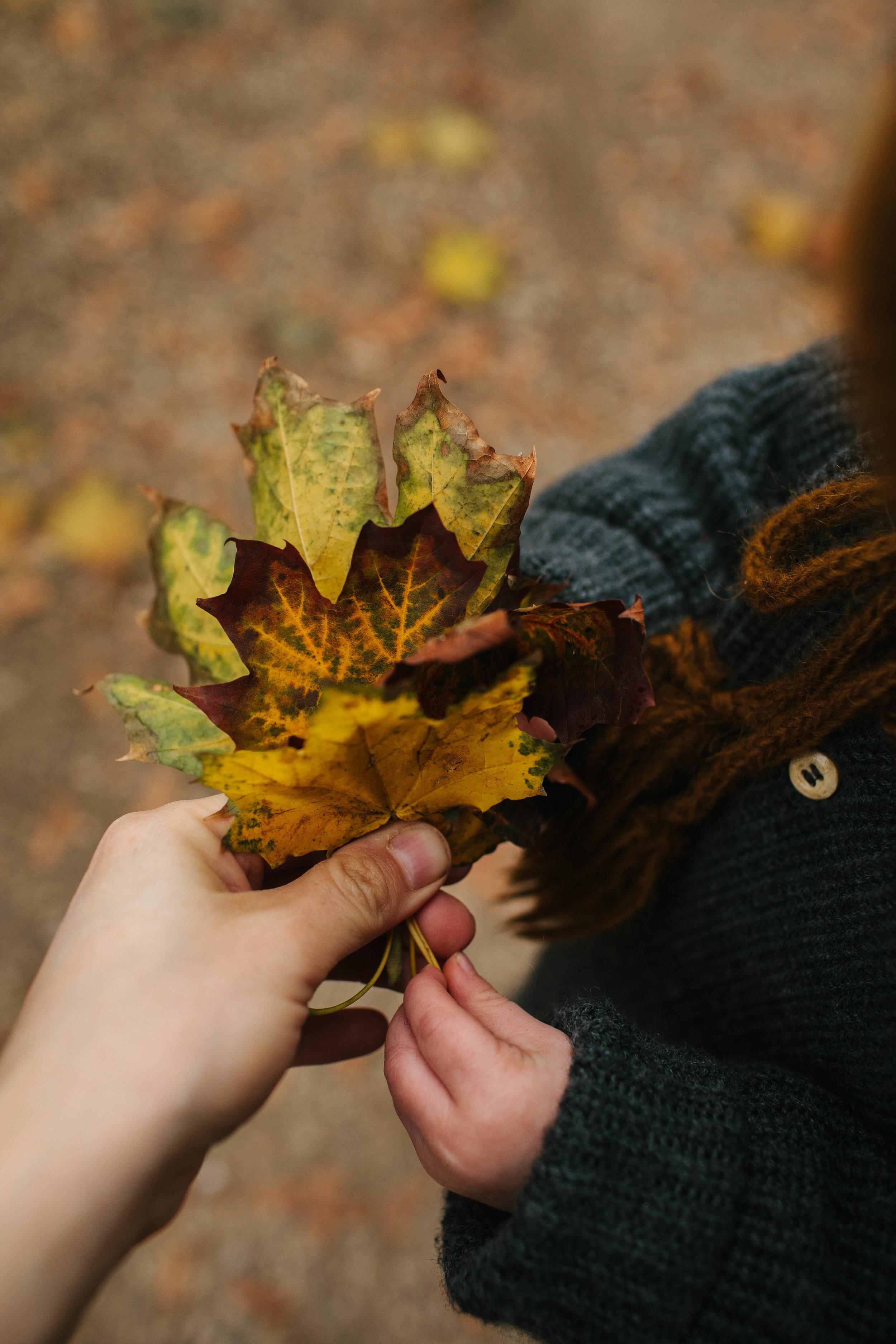 vauxhall_city_farm_autumn-1.jpg