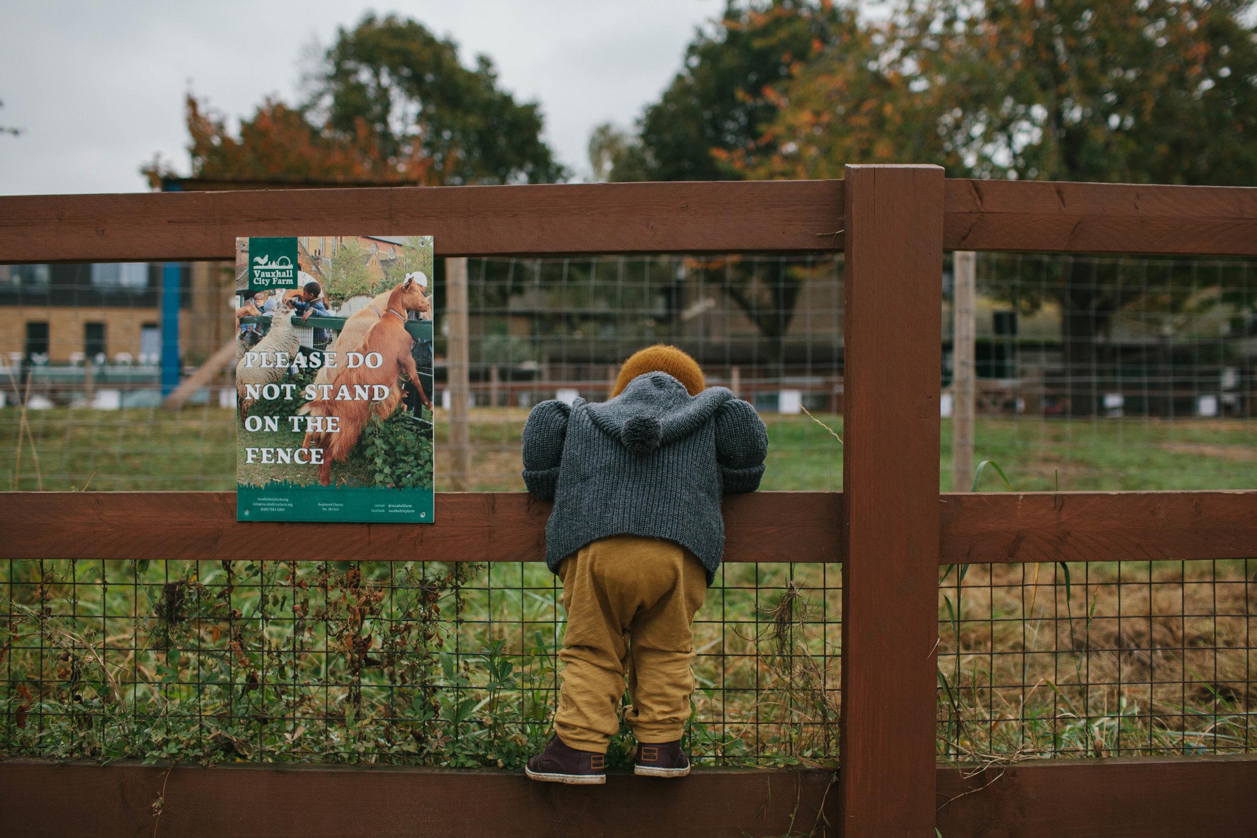 vauxhall_city_farm_autumn-26.jpg