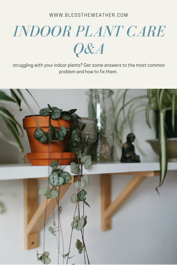 caring-for-your-indoor-plants.png