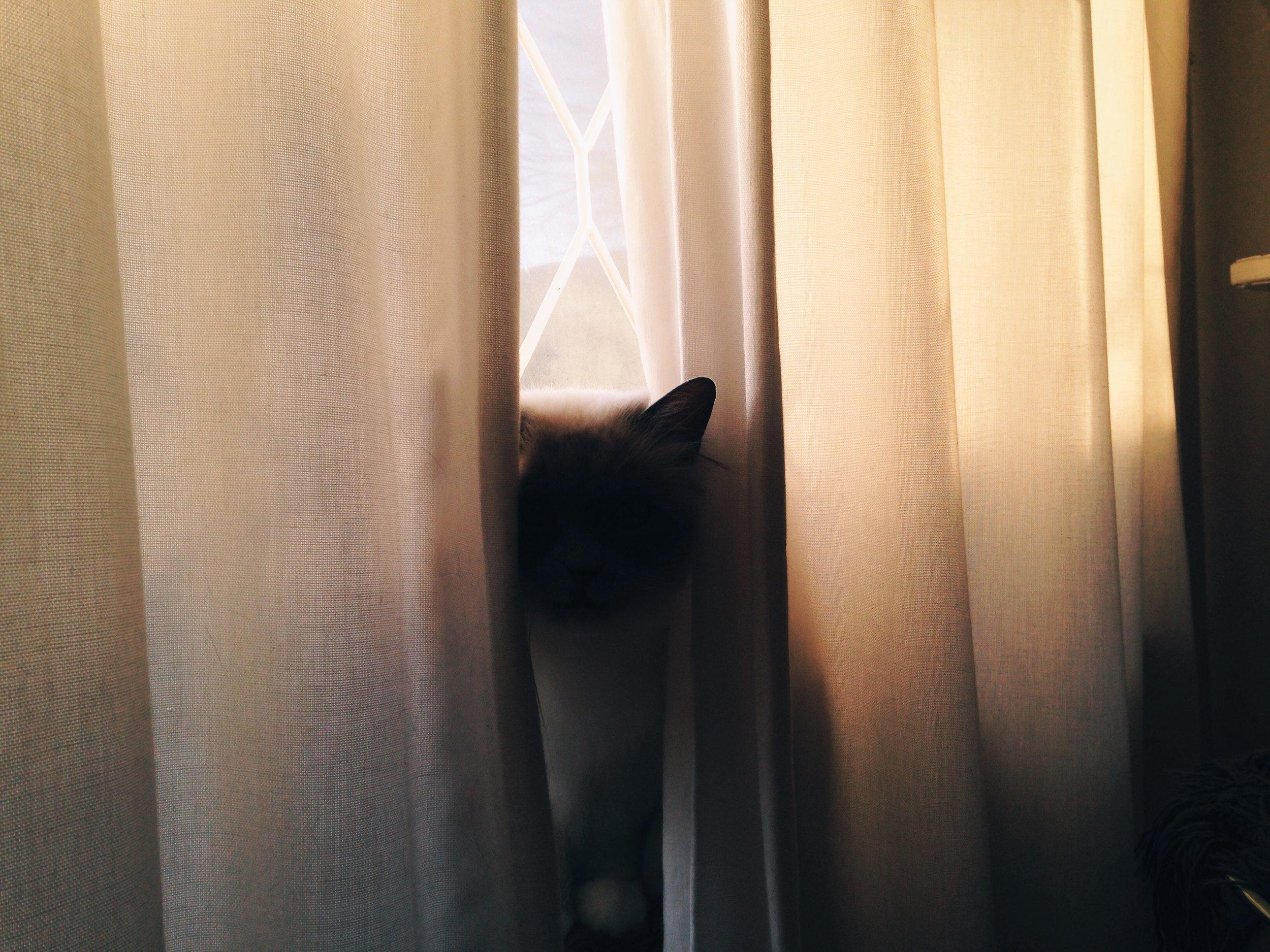 Lisa Cat.JPG