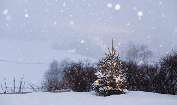 christmas-tree-621989.jpg