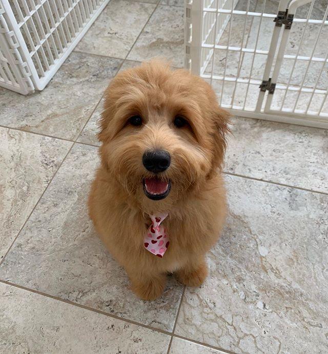 Fluffiest puppy 🥰