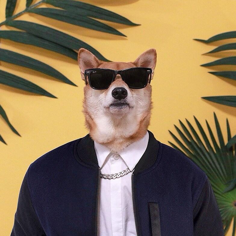 @mensweardog