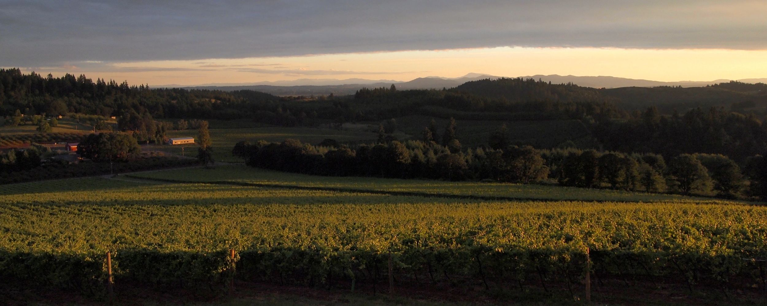 The view overlooking the coast range at Willamette Valley Vineayrds