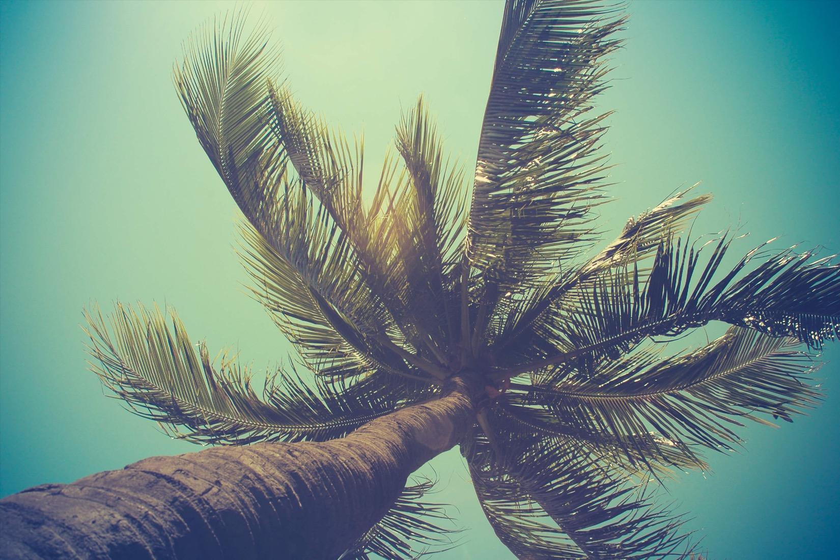 california-palm-beach-plain.jpg