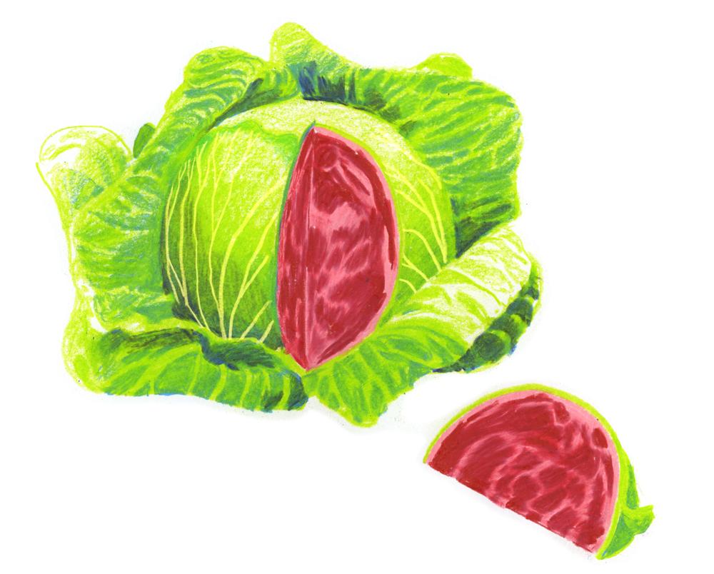 cabbage web.JPG