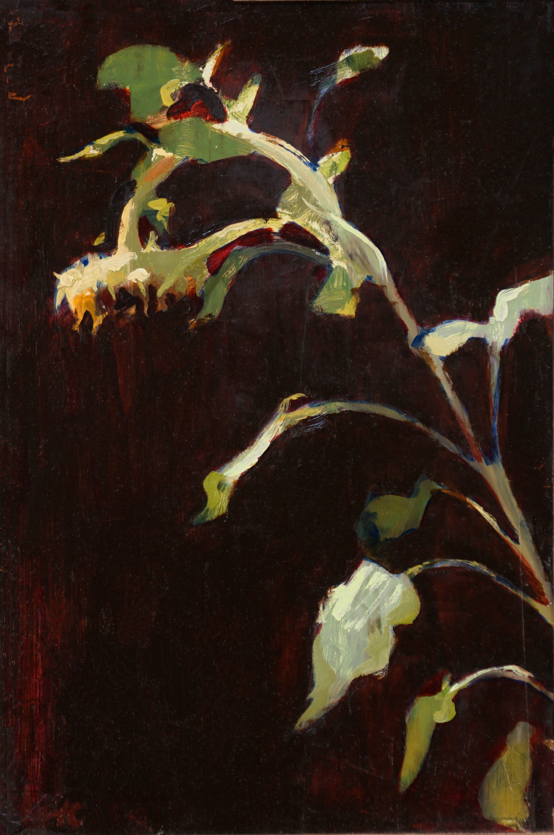 mark-crenshaw-1706-tall-sunflower-with-burgendy-background.jpg
