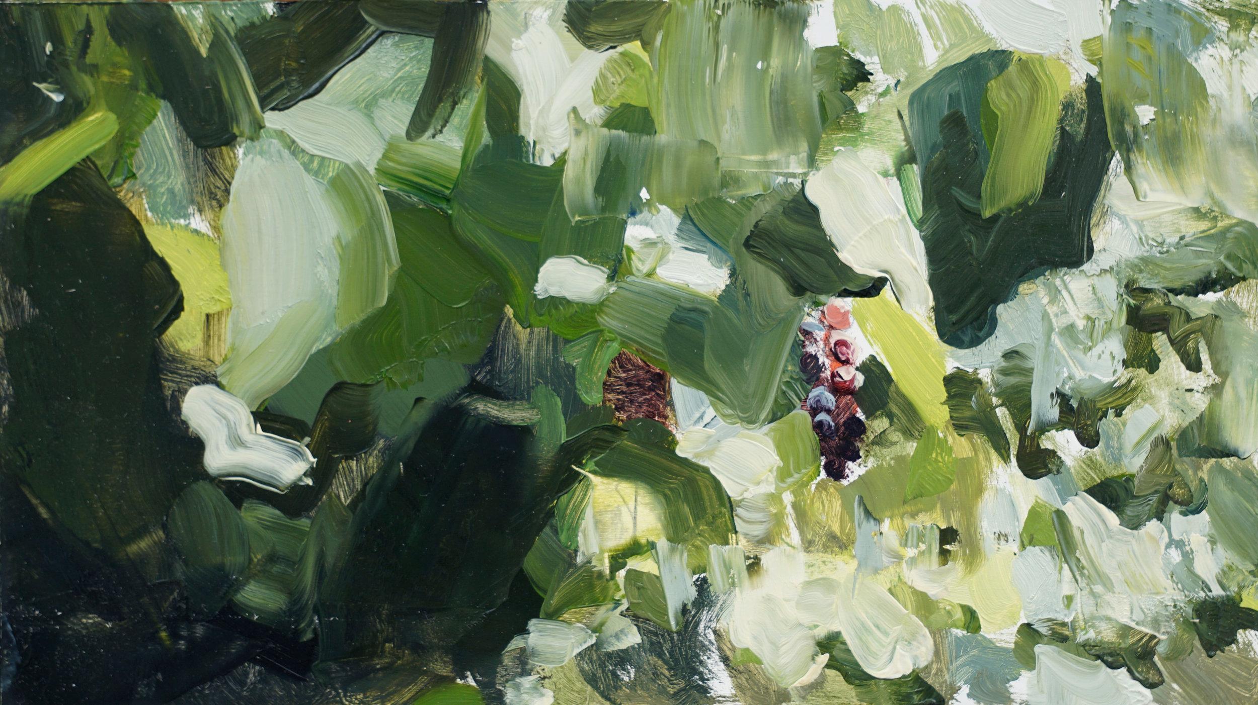 mark-crenshaw-1737-grapevine-split.jpg