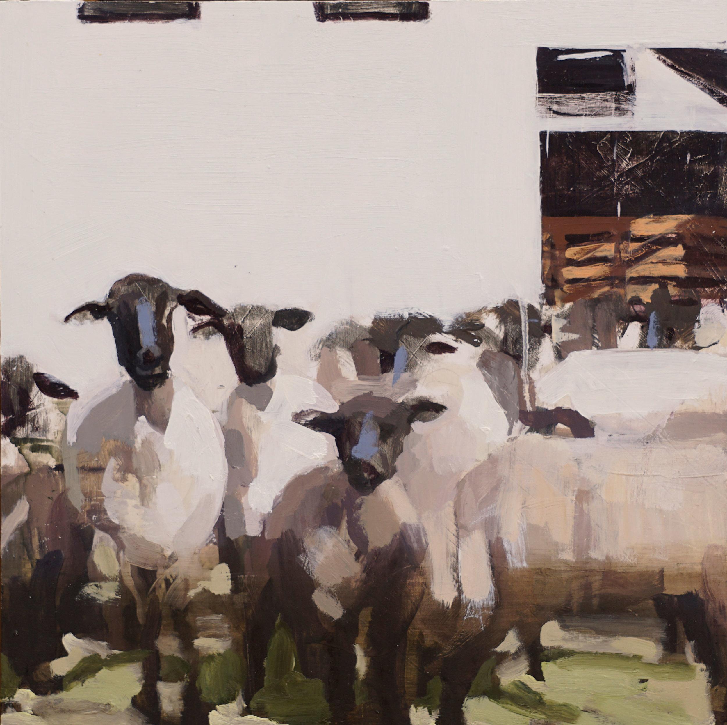 mark-crenshaw-1714-sheeps.jpg